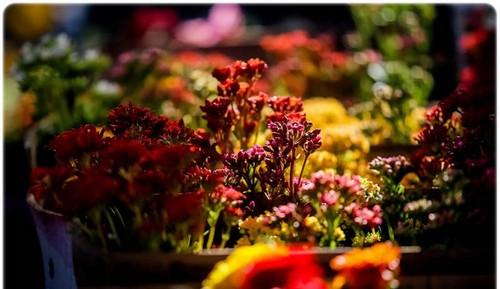 تصاویر زیبا و دیدنی از بازار گل تهران  تصاویر زیبا و دیدنی از بازار گل تهران 1463228973 irannaz com