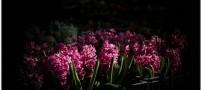 تصاویر زیبا و دیدنی از بازار گل تهران