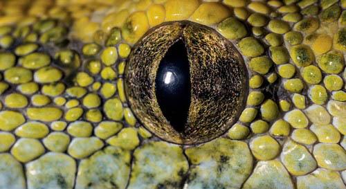 عکس های باورنکردنی از چشم حیوانات  عکس های باورنکردنی از چشم حیوانات 15 12