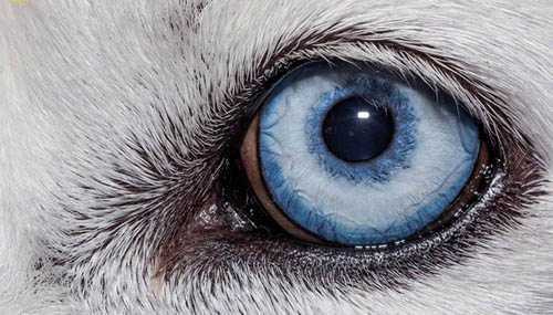 عکس های باورنکردنی از چشم حیوانات  عکس های باورنکردنی از چشم حیوانات 16 10