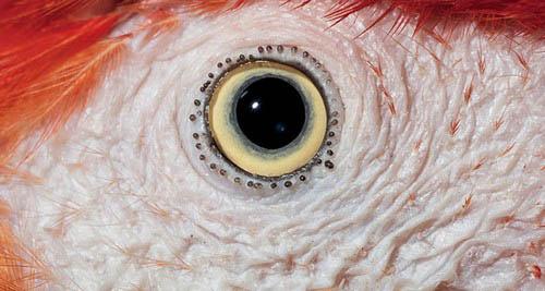 عکس های باورنکردنی از چشم حیوانات  عکس های باورنکردنی از چشم حیوانات 17 11