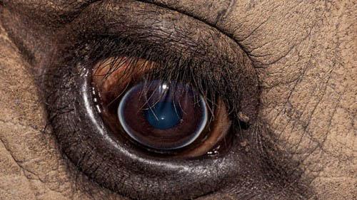 عکس های باورنکردنی از چشم حیوانات  عکس های باورنکردنی از چشم حیوانات 18 9