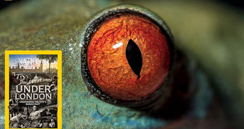 عکس های باورنکردنی از چشم حیوانات  عکس های باورنکردنی از چشم حیوانات 20 9