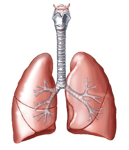 انواع بیماری های ریه را بشناسید!!