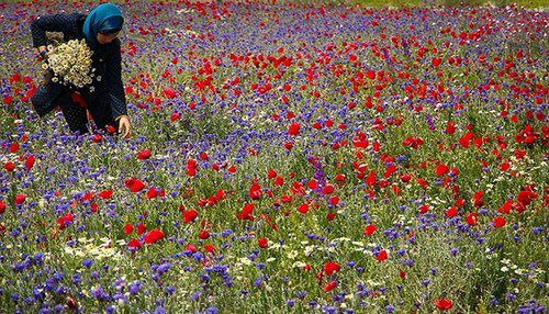 عکس هایی از طبیعت اردبیل در خردادماه