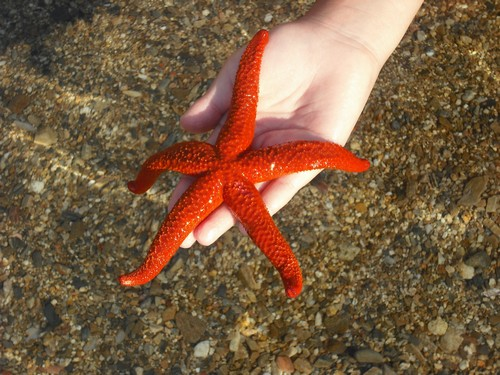 دانستنی هایی جالب درباره ی ستاره دریایی