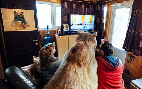 این خرس فرزند خوانده ی این زوج روسی است (عکس)