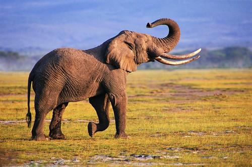داستان زیبای درسی که فیل به کودک داد
