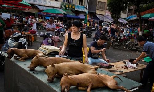 عکس هایی از خورده شدن 1000 سگ طی 10 روز