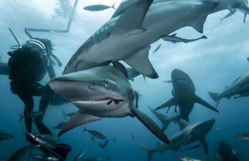 عکس های جالب از نماهایی دیدنی از حیوانات در زیر آب