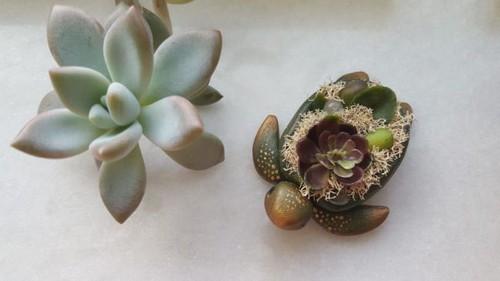 عکس هایی از ساخت جواهراتی جالب از جنس طبیعت