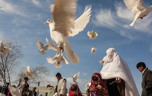 تصاویر دردناک از زخمهایی بر تن زنان افغان  تصاویر دردناک از زخمهایی بر تن زنان افغان 15 1