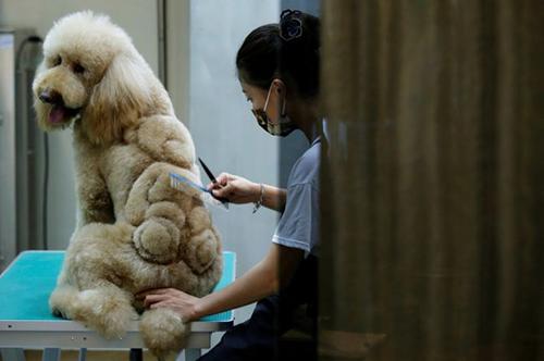عکس های دیدنی از طراحی روی پوست و موی حیوانات