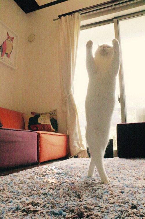 این گربه رقاص همه را مجذوب خودش کرد (عکس)