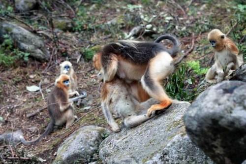 عزاداری عجیب میمون مادر بعد از مرگ فرزندش (عکس)