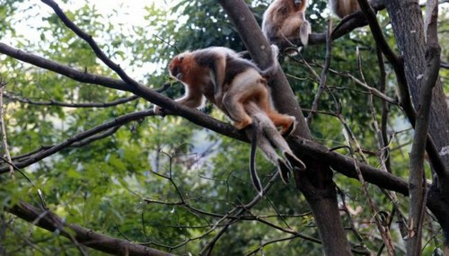 عزاداری عجیب میمون مادر بعد از مرگ فرزندش (عکس)  عزاداری عجیب میمون مادر بعد از مرگ فرزندش (عکس) 146780539066669 irannaz com