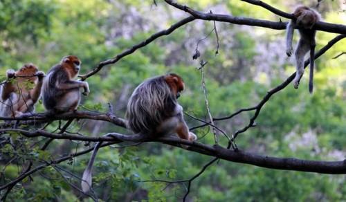 عزاداری عجیب میمون مادر بعد از مرگ فرزندش (عکس)  عزاداری عجیب میمون مادر بعد از مرگ فرزندش (عکس) 146780539734124 irannaz com