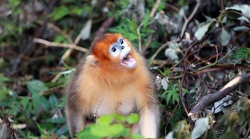 عزاداری عجیب میمون مادر بعد از مرگ فرزندش (عکس)  عزاداری عجیب میمون مادر بعد از مرگ فرزندش (عکس) 146780540272242 irannaz com