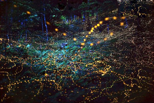 عکس هایی باورنکردنی از کرم های شب تاب :) 1