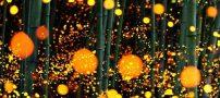 عکس هایی باورنکردنی از کرم های شب تاب در جنگل های ژاپن