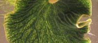 این حلزون های جالب شبیه به برگ درخت هستند (عکس)