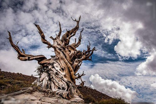 عکس هایی از منحصر به فردترین درخت های جهان