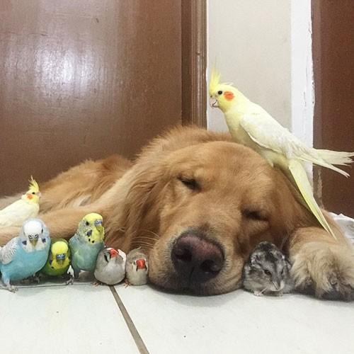 عکس های دیدنی از دوستی سگ و مرغ عشق ها