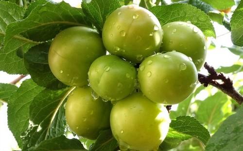 از خواص گوجه سبز برای پوست چه می دانید؟!