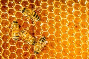 عسل طبیعی همراه با ویژگی های آن