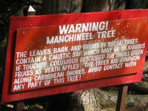 با خطرناک ترین درخت دنیا آشنا شوید (عکس)