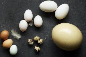 تخم شترمرغ همراه با خواص جالب آن