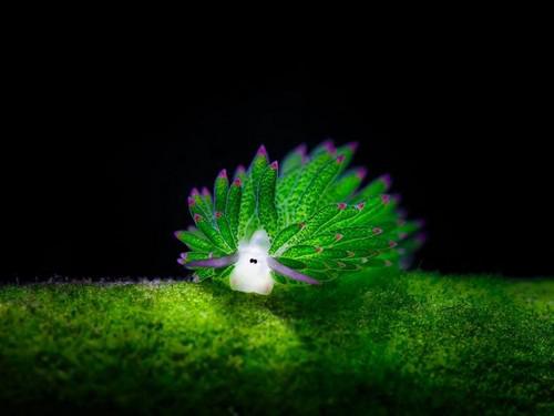 عکس هایی از زیباترین هیولاهای اعماق دریا