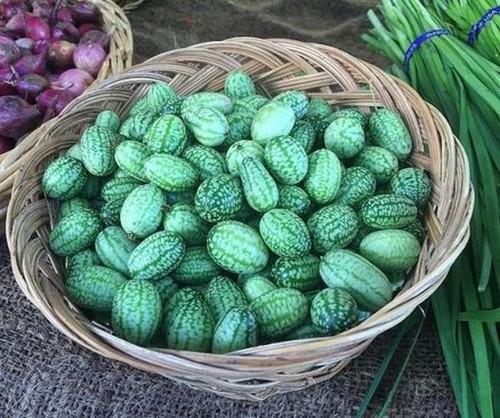 میوه ی بسیار عجیب از پیوند هندوانه و خیار (عکس)