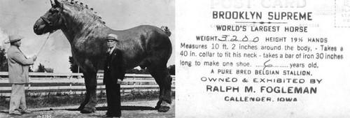 عکس هایی زیبا از بزرگترین اسب جهان
