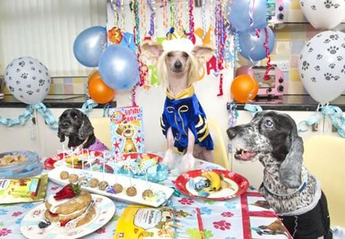 عکس هایی از خوش شانس ترین سگ جهان