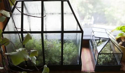عکس هایی از باغ آپارتمانی این خانم هنرمند
