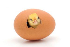 از فواید بی نظیر تخم مرغ چه می دانید؟