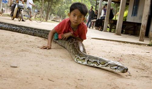 بازی این پسربچه با مار 4 متری وحشتناک (عکس)