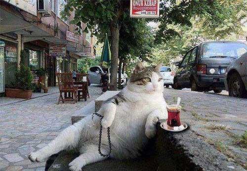 عکس نوشته های خنده دار و طنز آخر هفته  عکس نوشته های خنده دار و طنز آخر هفته 1600617806 irannaz com