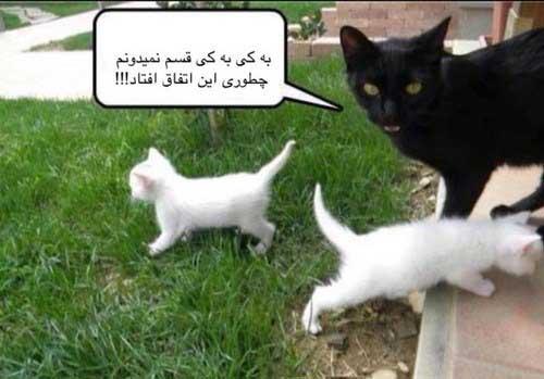 عکس نوشته های خنده دار و طنز آخر هفته  عکس نوشته های خنده دار و طنز آخر هفته 1661060725 irannaz com