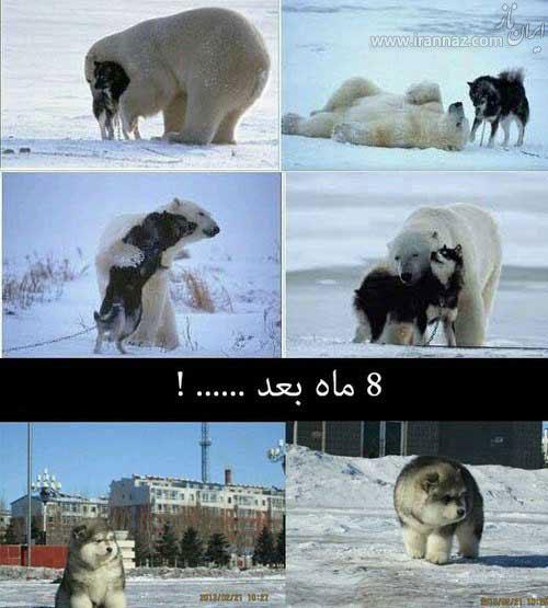 عکس نوشته های خنده دار و طنز آخر هفته  عکس نوشته های خنده دار و طنز آخر هفته 2103116639 irannaz com
