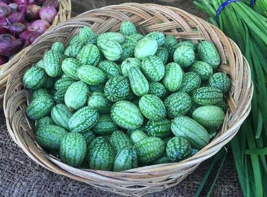 میوه ای عجیب و جدید به نام خیاندوانه!! (عکس)