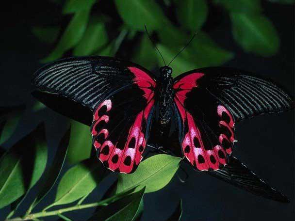 عکس های دیدنی از زیباترین پروانه های جهان