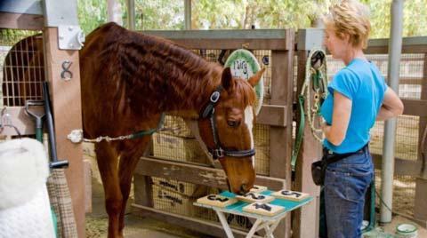 این اسب با هوش بالایش همه را شوکه کرد (عکس)