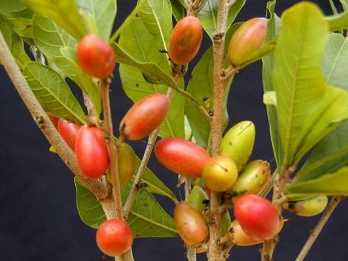 عکس های باورنکردنی از عجیب ترین میوه های دنیا  عکس های باورنکردنی از عجیب ترین میوه های دنیا 147281897344567 irannaz com