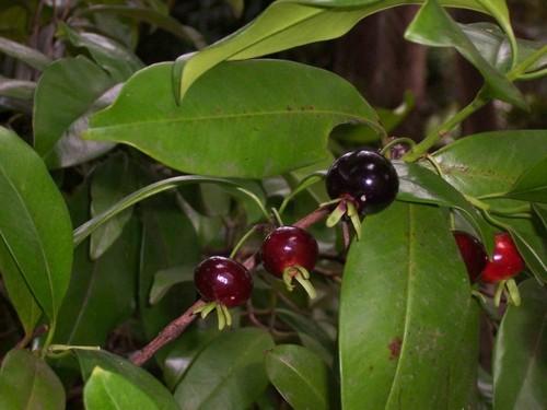 عکس های باورنکردنی از عجیب ترین میوه های دنیا  عکس های باورنکردنی از عجیب ترین میوه های دنیا 147281898094907 irannaz com