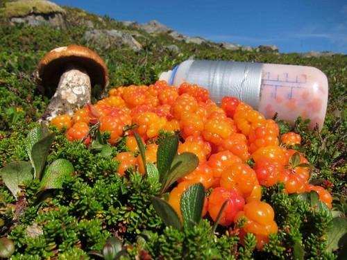 عکس های باورنکردنی از عجیب ترین میوه های دنیا  عکس های باورنکردنی از عجیب ترین میوه های دنیا 147281900040070 irannaz com