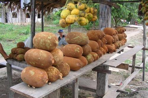 عکس های باورنکردنی از عجیب ترین میوه های دنیا  عکس های باورنکردنی از عجیب ترین میوه های دنیا 147281900431487 irannaz com