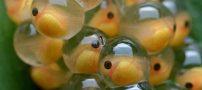 اشپل ماهی همراه با فواید و مضرات آن