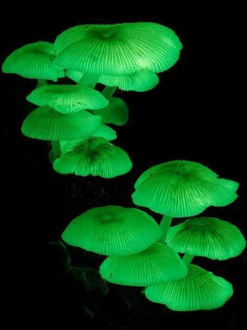 عکس های دیدنی از قارچ های شب تاب